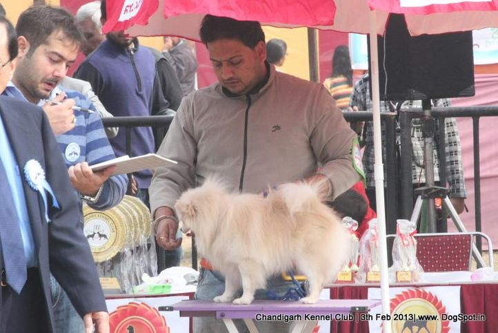 sw-75,, Chandigarh Dog Show 2013, DogSpot.in