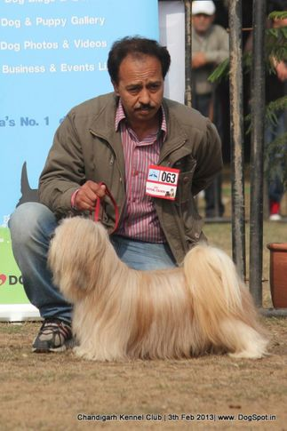 ex-63,lhasa apso,sw-75,, DHOOMI, Lhasa Apso, DogSpot.in