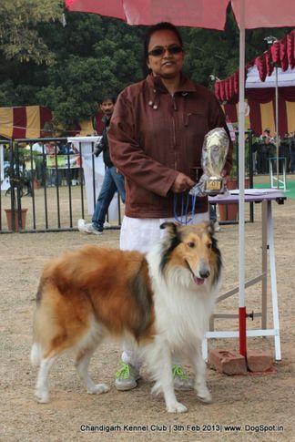 sw-75,dachshund, Chandigarh Dog Show 2013, DogSpot.in