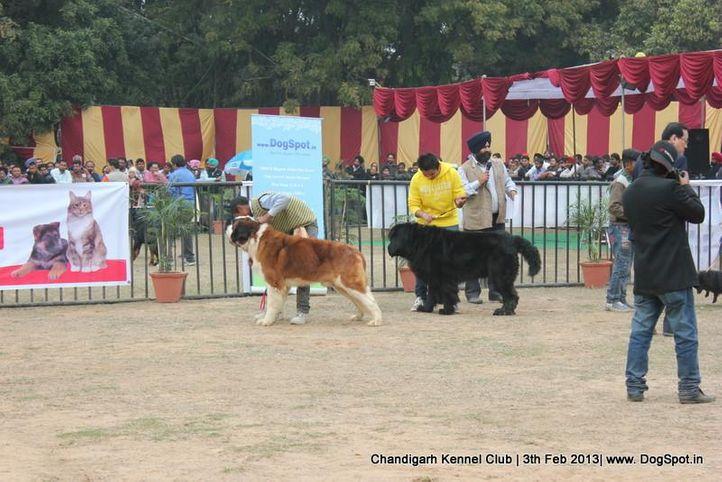 child handling,sw-75,, Chandigarh Dog Show 2013, DogSpot.in