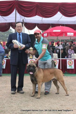 sw-75,, Chandigarh Dog Show 2013, DogSpot.in