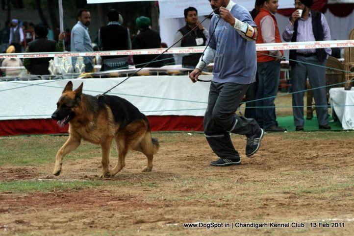 sw-35, ex-314,gsd, SEMMY VOMTEAM FIEMERCK, German Shepherd Dog, DogSpot.in