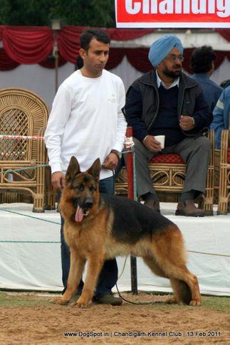 sw-35, ex-315,gsd,  WISKY FEETBACK, German Shepherd Dog, DogSpot.in