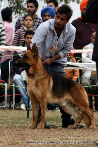 sw-35, ex-319,gsd, CASANDRA'S UNTOX, German Shepherd Dog, DogSpot.in