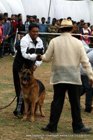sw-35, ex-327,gsd, EROS DELLE ANTICH MUSE, German Shepherd Dog, DogSpot.in