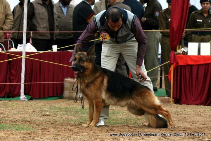 sw-35, ex-335,gsd,, TRAX VOM THERMADOS, German Shepherd Dog, DogSpot.in