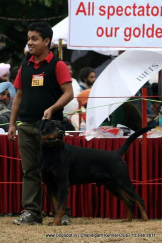 sw-35, ex-253,rottweiler,, CIDO FLASH ROUSE, Rottweiler, DogSpot.in
