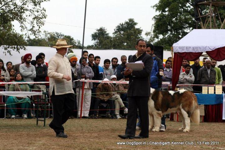 sw-35, ground,judges,ring steward,, Chandigarh Kennel Club 2011, DogSpot.in