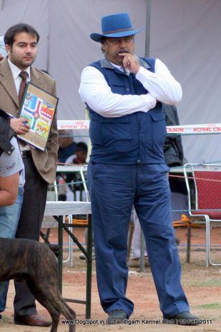 sw-35, ground,judging,, Chandigarh Kennel Club 2011, DogSpot.in