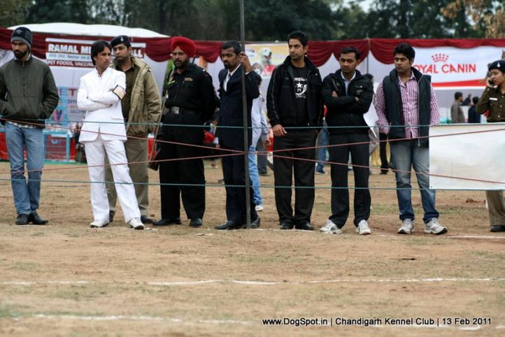 sw-35, ground,people,, Chandigarh Kennel Club 2011, DogSpot.in
