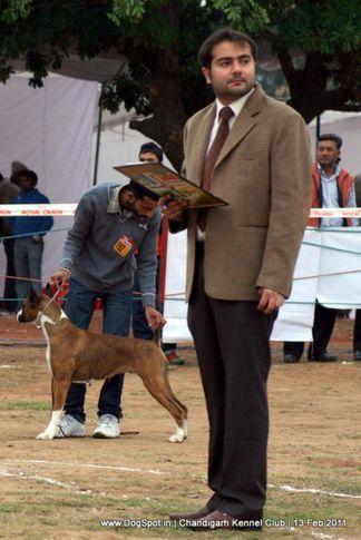 sw-35, ground,ring steward,, Chandigarh Kennel Club 2011, DogSpot.in