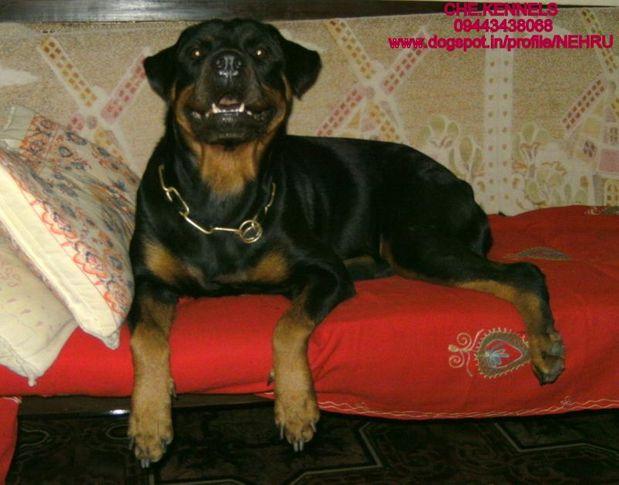 chekennels,vellore,tamilnadu, CHE.KENNELS,VELLORE,TAMILNADU, DogSpot.in