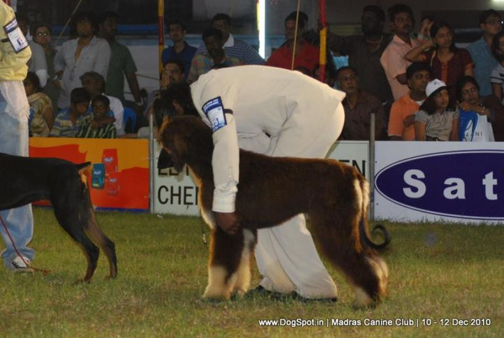 chennai dog shows, Chennai Dog Shows, DogSpot.in