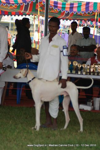 indian breeds,, Chennai Dog Shows, DogSpot.in
