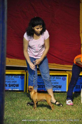 child handler,, Chennai Dog Shows, DogSpot.in