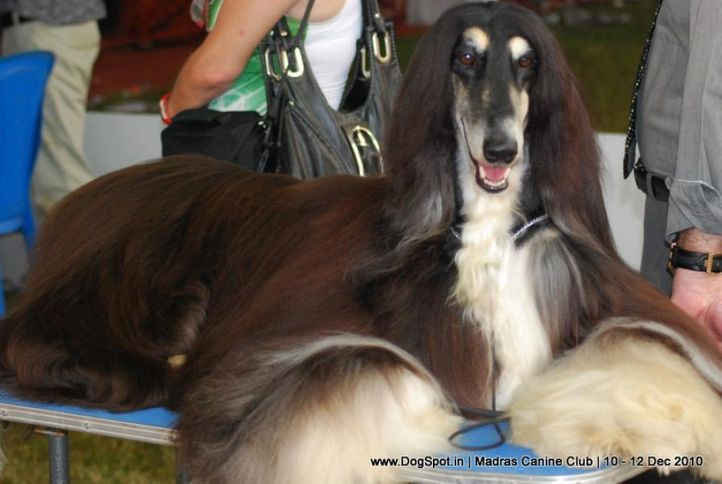 chennai dog shows, Chennai Dog Shows, DogSpot.in