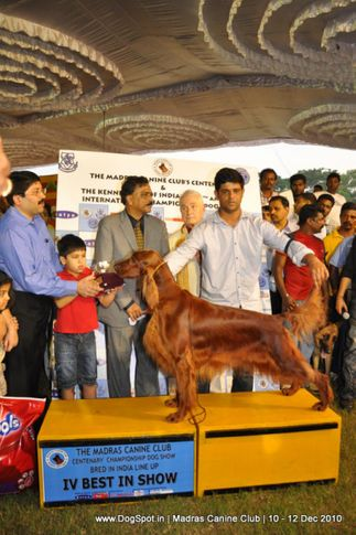 lineup,, Chennai Dog Shows, DogSpot.in