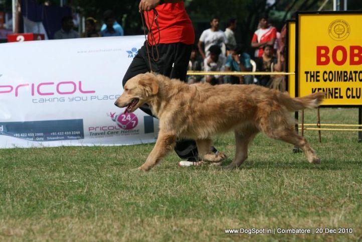 sw-19, golden,, Coimbatore 2010, DogSpot.in