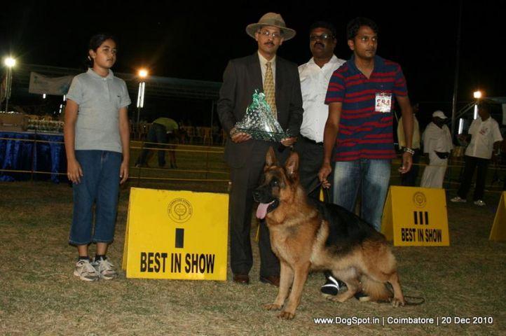 sw-19, ex-284,lineup,, KINGSWAY'S MIKA, German Shepherd Dog, DogSpot.in