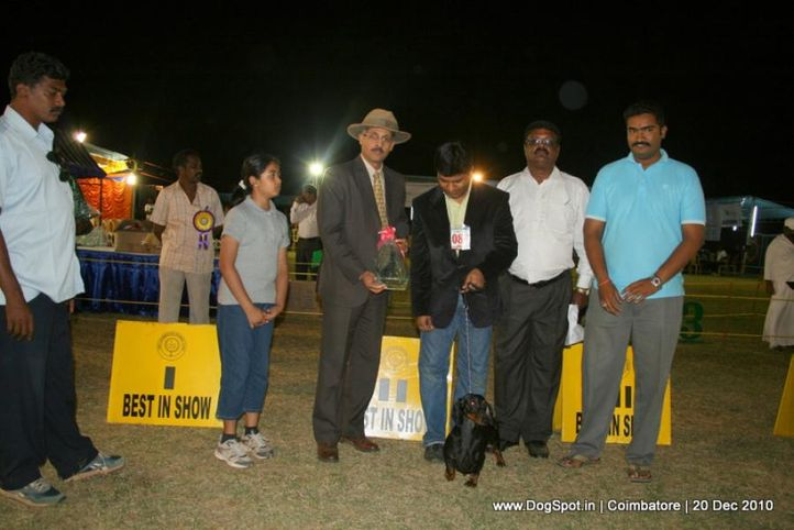 sw-19, dachshund,ex-85,lineup,, PADPRANPARK'S WILSON, Dachshund Standard- Smooth Haired, DogSpot.in