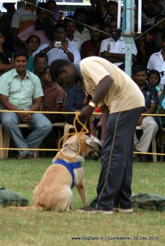 sw-19, agility,, Coimbatore 2010, DogSpot.in