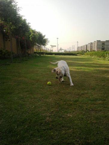 , daizy, DogSpot.in