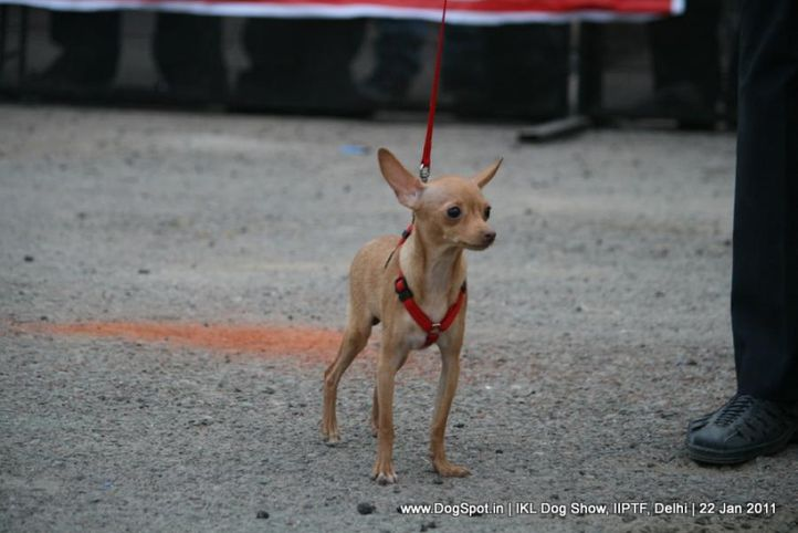 all breed championship,, Day 2 IKL Show IIPTF, DogSpot.in