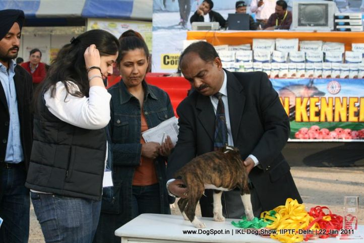 all breed championship,boxer,, Day 2 IKL Show IIPTF, DogSpot.in