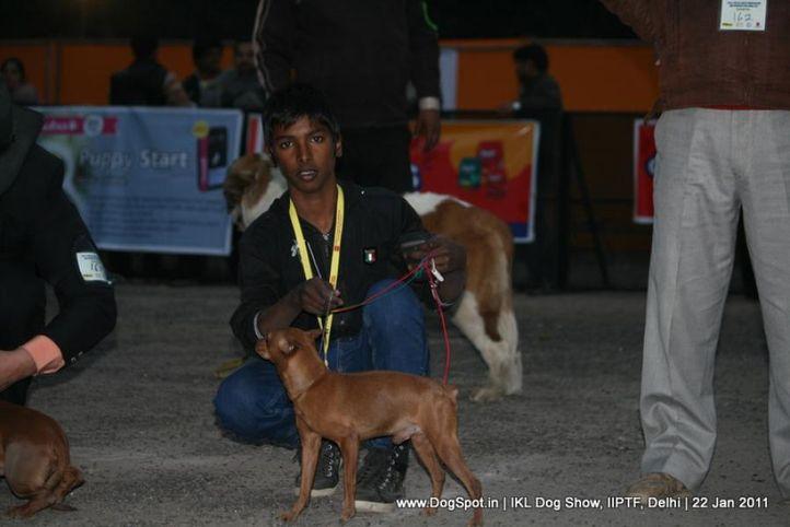 all breed championship,minpin,, Day 2 IKL Show IIPTF, DogSpot.in