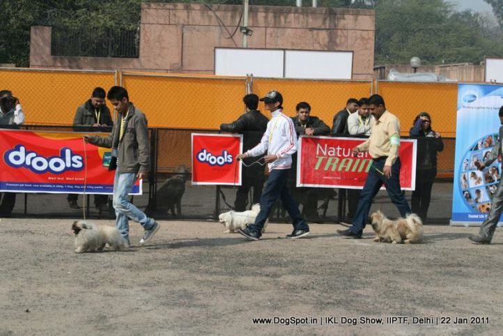 all breed championship,pekingese,tibetian spaniel,, Day 2 IKL Show IIPTF, DogSpot.in