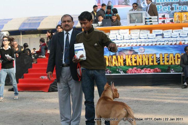all breed championship,pitbull,, Day 2 IKL Show IIPTF, DogSpot.in