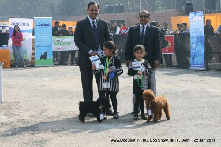 all breed championship,poodle,, Day 2 IKL Show IIPTF, DogSpot.in