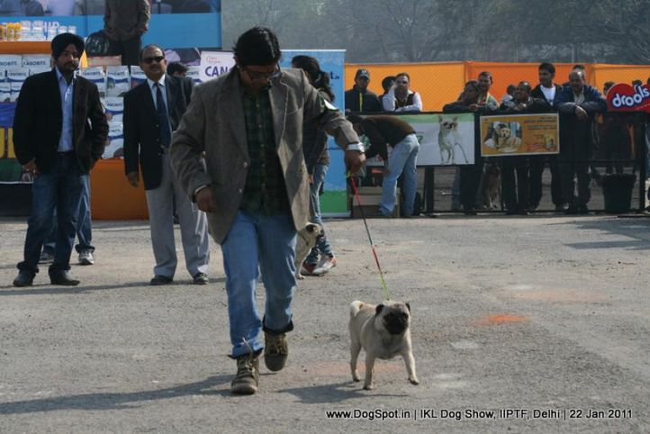 all breed championship,pug,, Day 2 IKL Show IIPTF, DogSpot.in