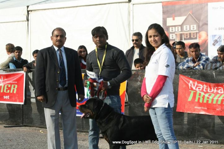 all breed championship,rottweiler,, Day 2 IKL Show IIPTF, DogSpot.in