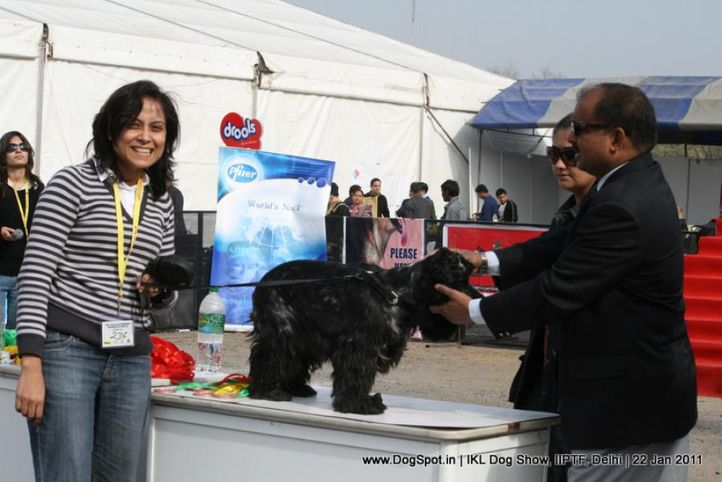 all breed championship,spaniel,, Day 2 IKL Show IIPTF, DogSpot.in