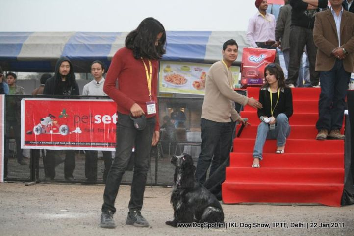 all breed championship,cocker,, Day 2 IKL Show IIPTF, DogSpot.in