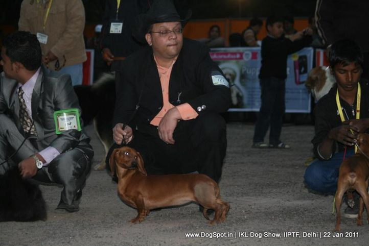 all breed championship,dashchund,, Day 2 IKL Show IIPTF, DogSpot.in