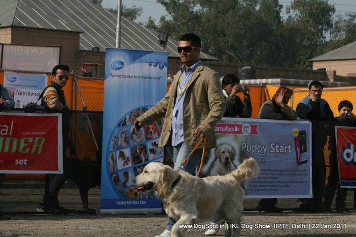 all breed championship,golden,, Day 2 IKL Show IIPTF, DogSpot.in
