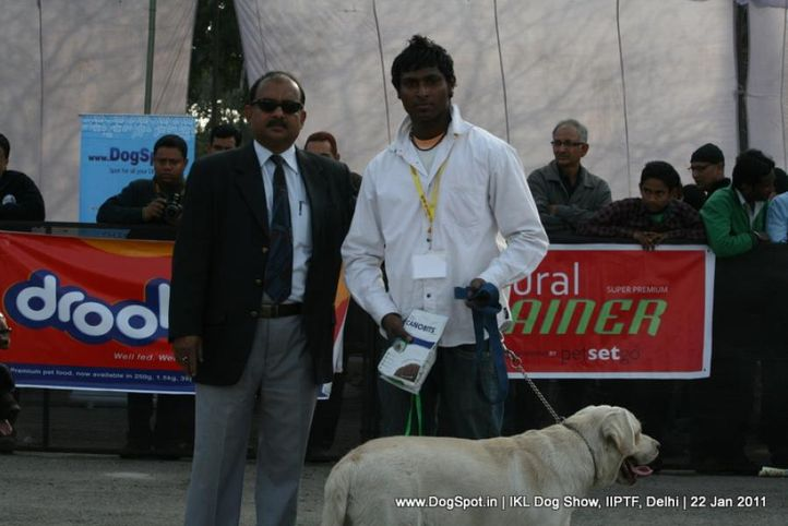 all breed championship,labrador,, Day 2 IKL Show IIPTF, DogSpot.in