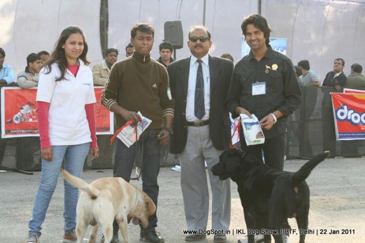 all breed championship,labrador,, Day 2 IKL Show IIPTF, DogSpot.in