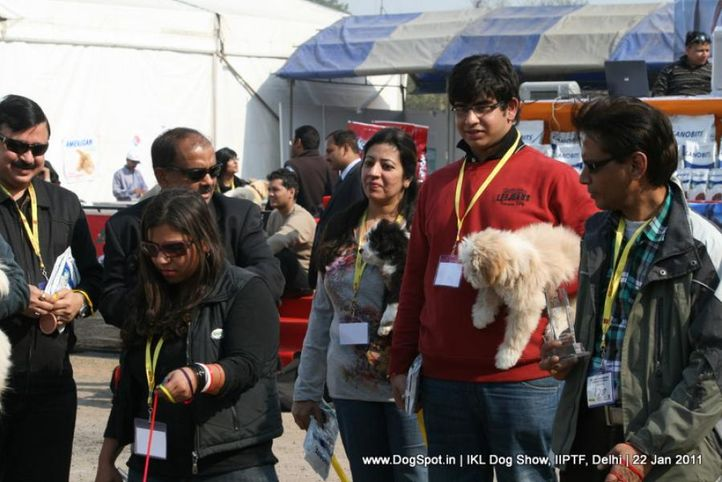 all breed championship,lhasa,, Day 2 IKL Show IIPTF, DogSpot.in