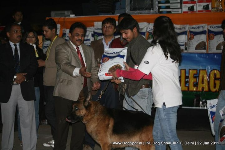 all breed championship,lineup,, Day 2 IKL Show IIPTF, DogSpot.in
