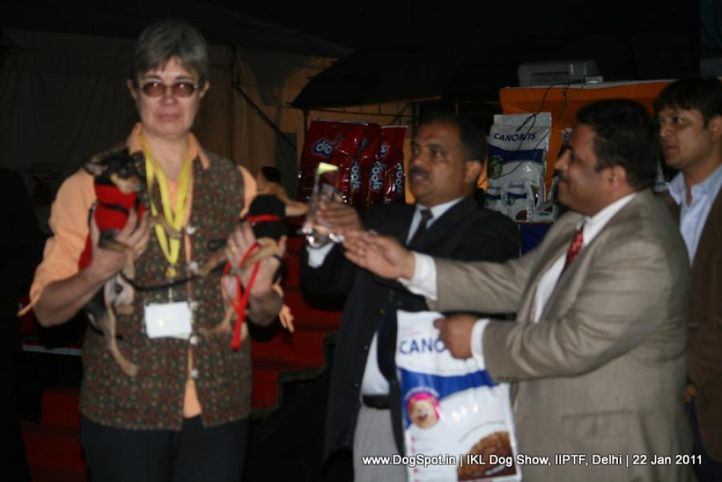 all breed championship,lineup,minpin,, Day 2 IKL Show IIPTF, DogSpot.in