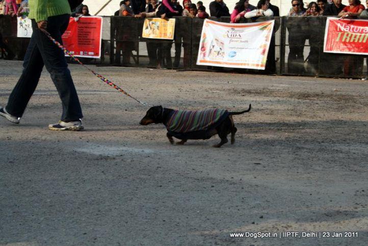 fashion show,, Day 3 IIPTF, DogSpot.in