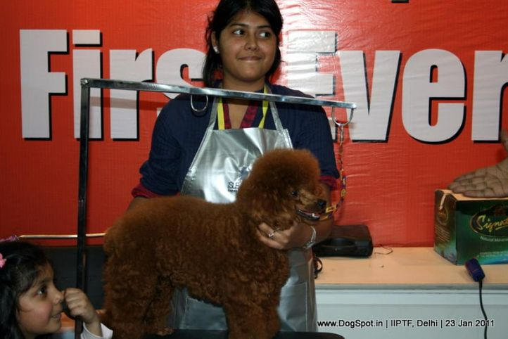 grooming competition,, Day 3 IIPTF, DogSpot.in