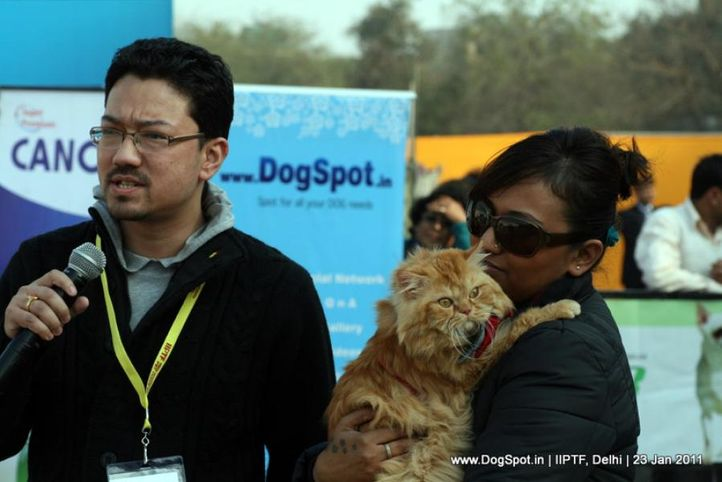cats,, Day 3 IIPTF, DogSpot.in
