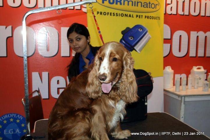 grooming competition, Day 3 IIPTF, DogSpot.in