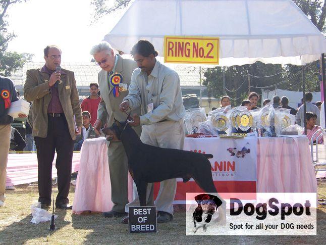 Doberman,, Dehradun Dog Show 2008, DogSpot.in
