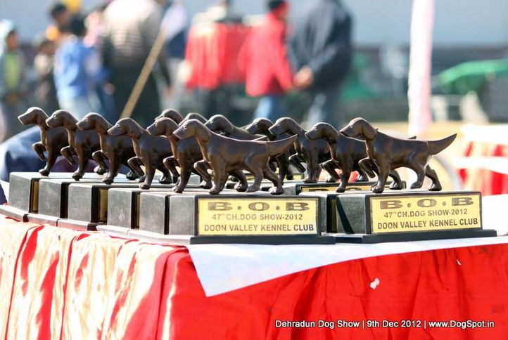show trophy,sw-73,, Dehradun Dog Show 2012, DogSpot.in