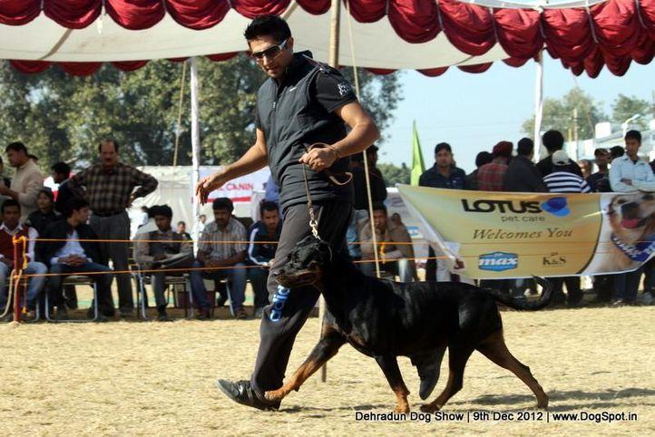 ex-194,rottweiler,sw-73,, RAHULIK'S FRUITY, Rottweiler, DogSpot.in